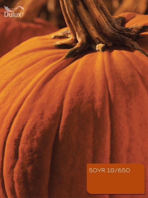 #dulux #pumpkin