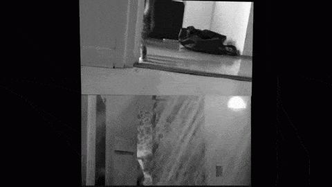 Psycho Shower Scene Remade With Kittens, And Its Terrifying