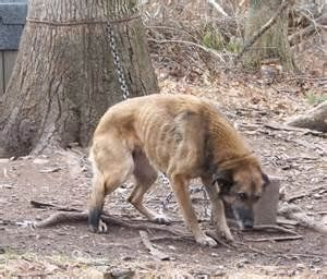 Petition · Under the current township by-laws its legal for dog owners to chain or confine their dogs outdoors 24/7, day in, day out until they die. This is INHUMANE and CRUEL and needs to change. · Change.org