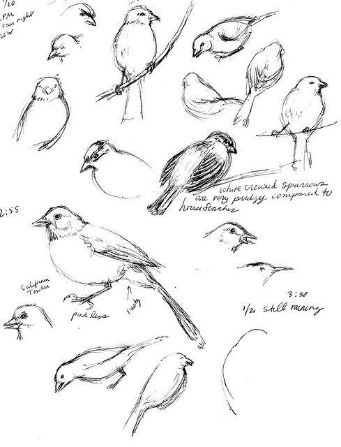 FINCH Bird sketches from our feeder by debdrex, via Flickr