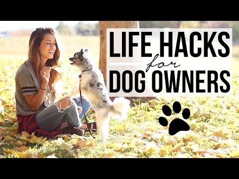15 Awesome Hacks & Tips For Dog Owners
