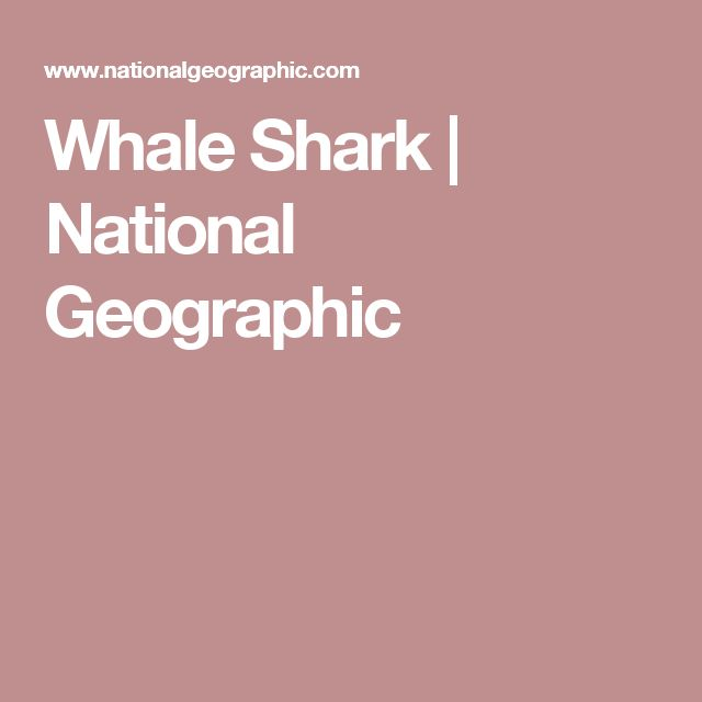 Whale Shark | National Geographic