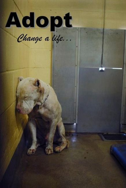 .: Animal Shelters, Adoption A Dogs, Pitbull, Make A Difference, My Heart, Pit Bull, Shelters Dogs, Pet Stores, Myheart