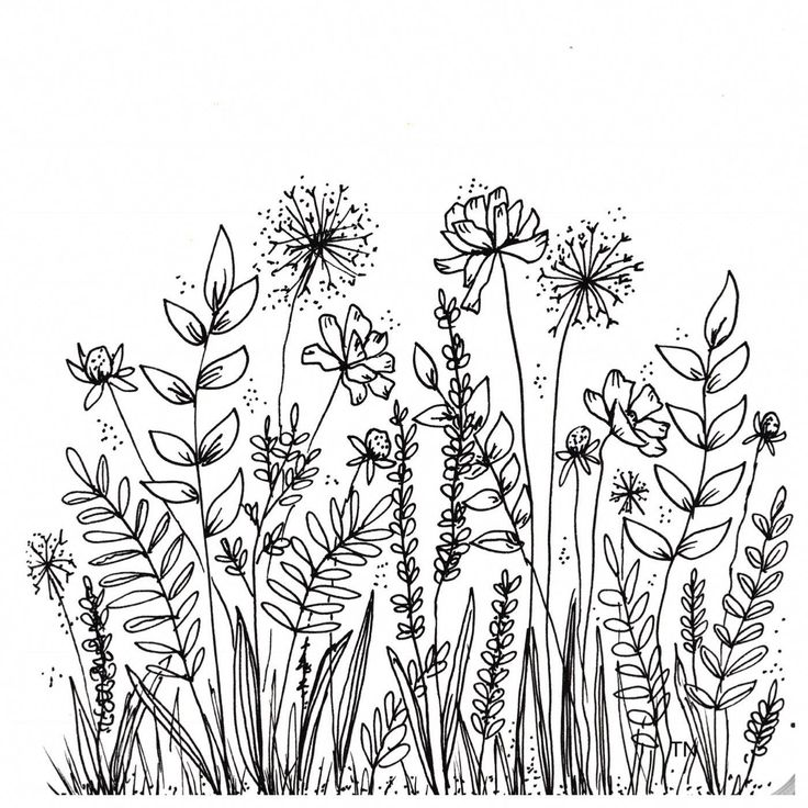 Botanical Line Drawings and Doodles Coisas simples para