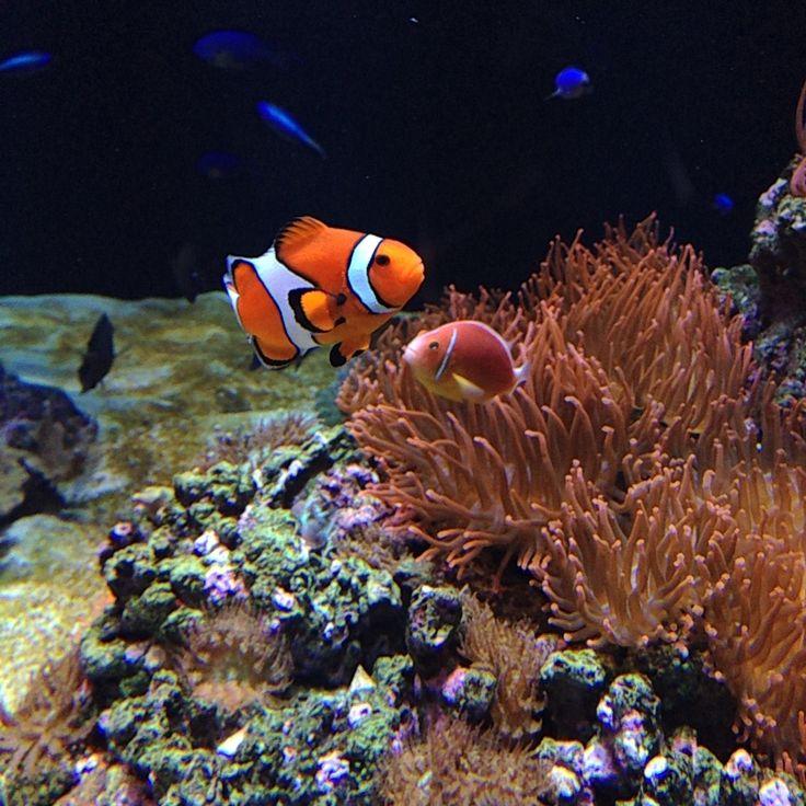 Find Nemo, Oceanario Lisboa