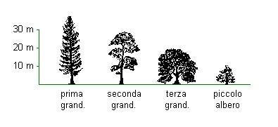 La classificazione degli alberi