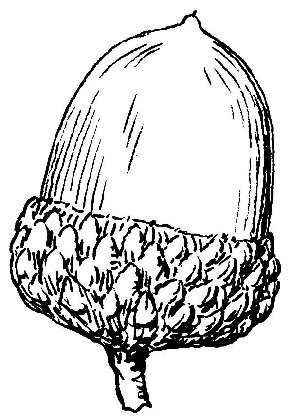 Acorn Acorn Coloring Pages For Kids Coloring Pages Coloring Pages For Kids Color