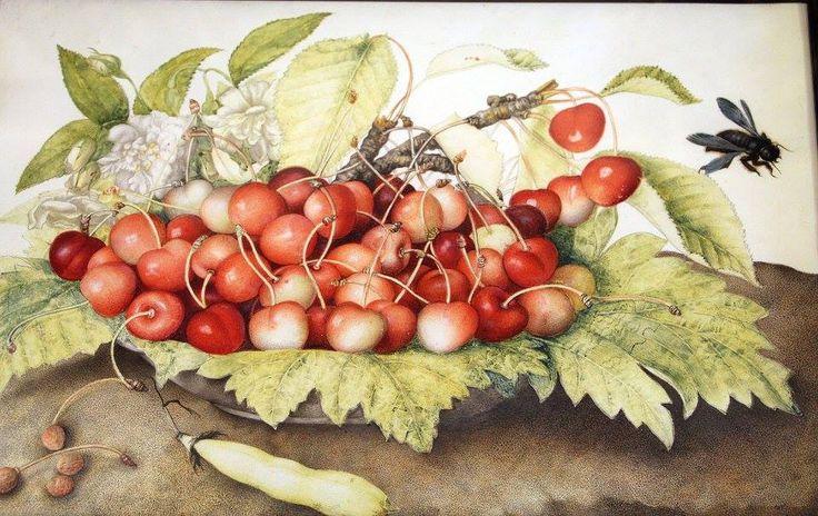 Giovanna Garzoni, piatto di ciliege con rose, baccello e ape legnaiola (xylocopa violacea) 1642-51 ca.
