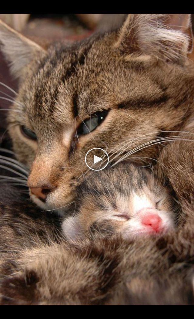 Don T Let Biting Behavior Become A Bad Habit 5 Simple Tips To Stop Your Kitten Biting Kitten Biting Kitten Biting Stop Kitten Biting In 2020 Cute Cats Cats Kittens
