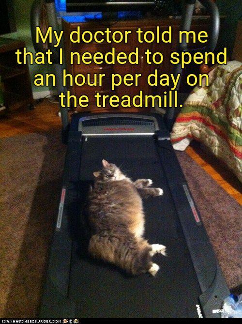 Http Cheezburger Com  Cute Cats Meme