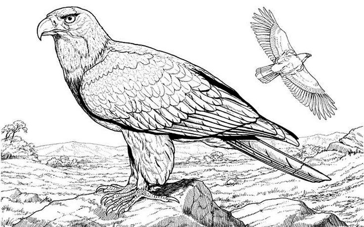 wildlifedepartment coloring pages - photo#39