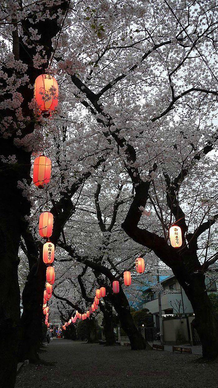 Pin By Zeinab Ousmanou Sadia On Japanese Inspiration Aesthetic Japan Japan Aesthetic Cherry Blossom Festival