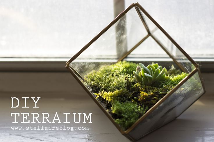 DIY terrarium   Stellaire