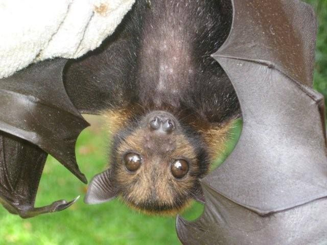 -Bats- Several species-Aerial acrobatics at dusk!  They like warmth and some sleep between the gutter and the facia on the north side of the house. Mosquito eaters!  Love 'em