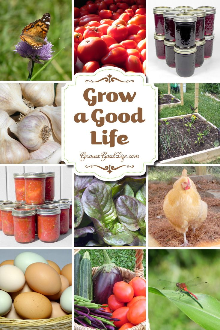 Grow a Good Life documents our journey to live a more self-sufficient life. Along the way, I write about our experiences growing our own food, backyard chickens, preserving the harvest, and living a simple life in rural Maine. You too can Grow a Good Life! The journey begins with one step…one act…one decision that can lead you to a more fulfilling lifestyle of self-sufficiency, control over the foods you eat, and the overall quality of life that you live. Visit growagoodlife.com to get…