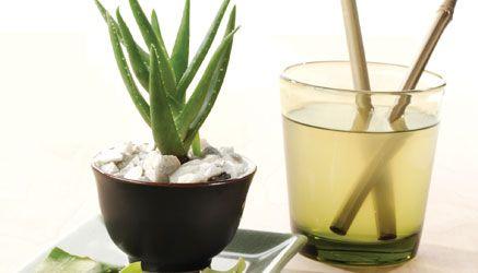 Healing Foods: Aloe   Vegetarian Times