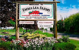 Emma Lea Farms - family friendly, wagons to pull the little ones to and from the field, picnic tables, and a snack bar with home made baked treats and ice cream. A wonderful place to spend a summer afternoon.