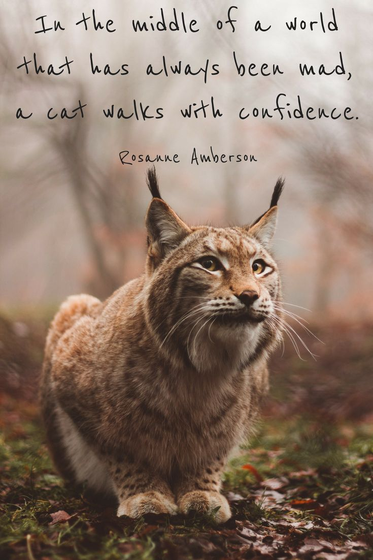 Cats A Collection of Quotes Cat quotes, Cats, Cat love