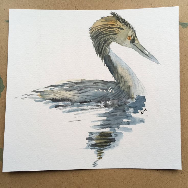 Grebe - water bird painting in watercolours by KnottyThistle on Etsy