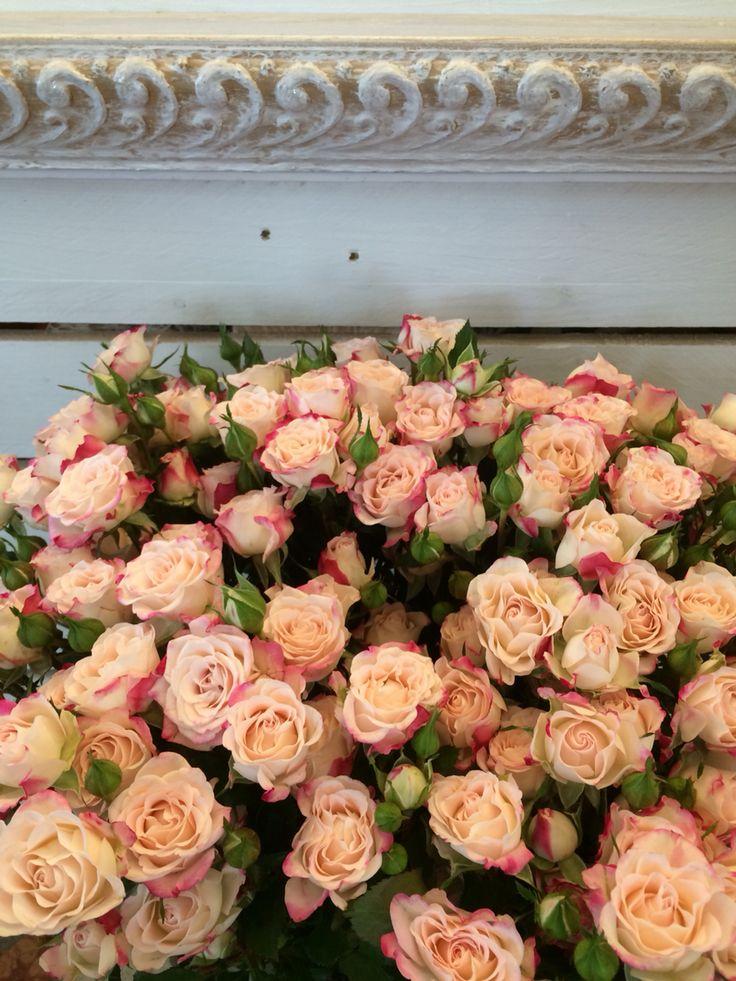 Rose ramificate