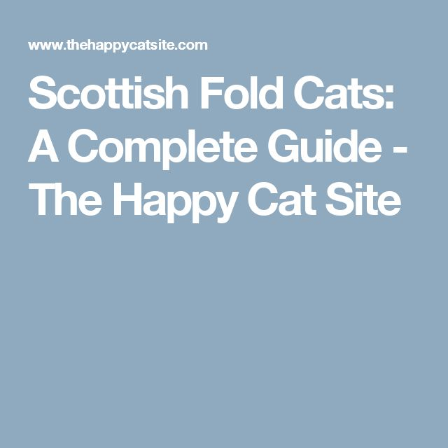 Scottish Fold Cats: A Complete Guide - The Happy Cat Site