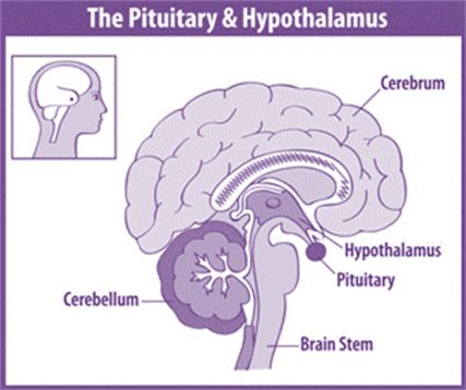 The Pituitary Foundation is UK's leading charity providing support to people affected by disorders of the pituitary gland such as Acromegaly, Cushing's, Prolactinoma, Diabetes Insipidus and Hypopituitarism. It provides expert, up-to-date information on all aspects of pituitary conditions.