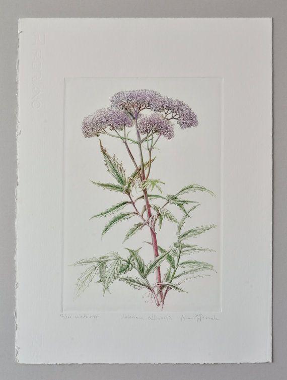 Valerian Valeriana officinalis  handmade by AtelierPoltorak