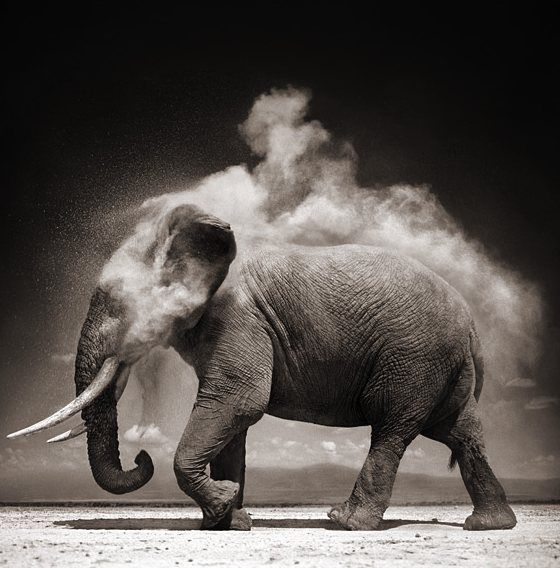 Nick Brandt photography. (Couldn't pin from his website, but it's definitely worth checking out!)