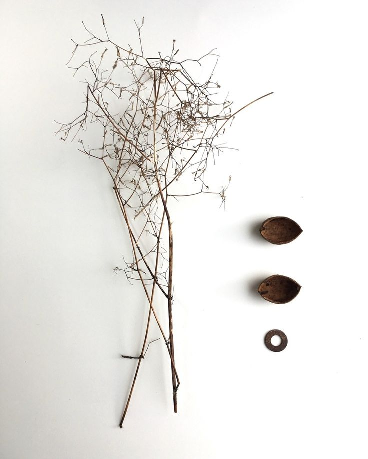 found-fabricated: Finds- urban weeds, shell husks and washer, Northern Ireland.
