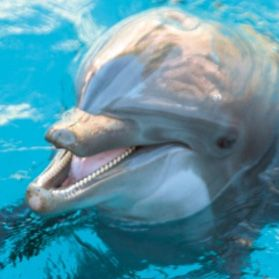 Mundo Mar - animal park