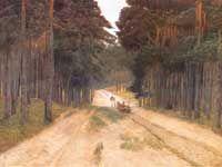 Droga w lesie - J. Chełmoński