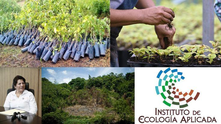 Estudian capacidad de bosques de Tamaulipas para reducir gases efecto invernadero | Polemica Periodico Digital de Noticias