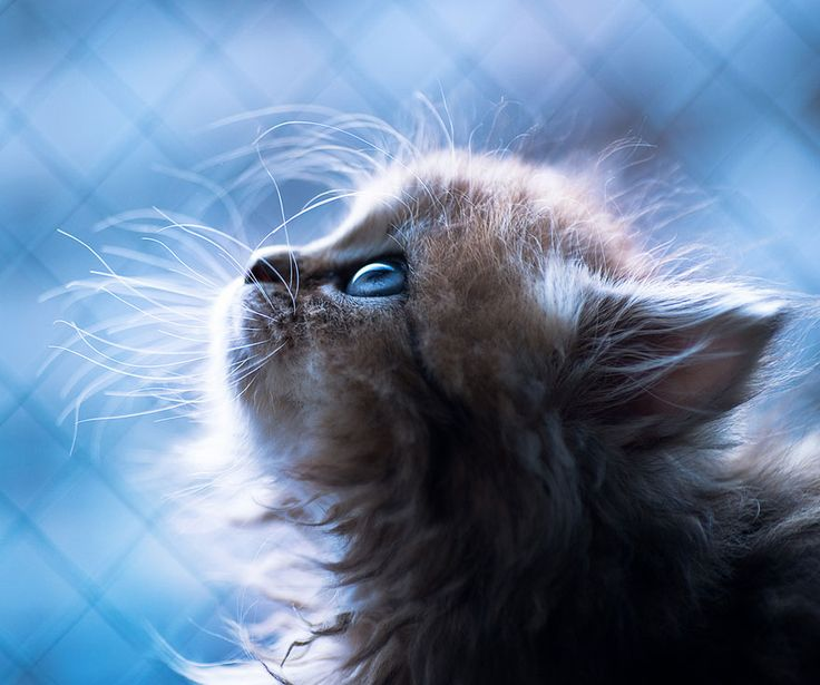 Probably the World's Cutest Kitten < Certainly one of the best photographed kittens at least.