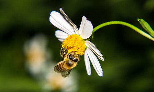 bees, Scientists Release Landmark Worldwide Assessment Detailing Effects of Bee-Killing Pesticides | EcoWatch