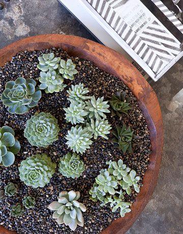 mini succulent garden: Design Inspiration, Eco Friendly Succulents, House Plants, Succulents Garden, Green Color, Garden Plantings, Homes, Ranch Houses