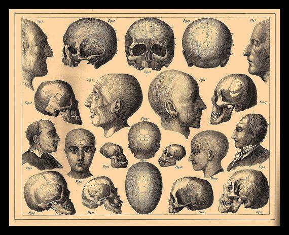 Skulls anatomy skeleton Fridge Magnet vintage Horror by Vividiom
