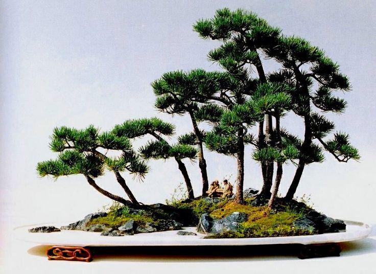 how to grow a mini bonsai tree