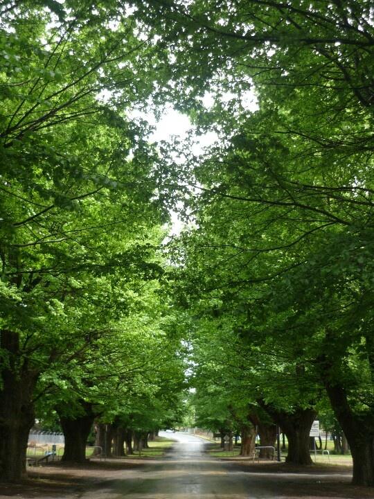 Tumut Elm Drive photo taken by Lara Krause Oct 2011