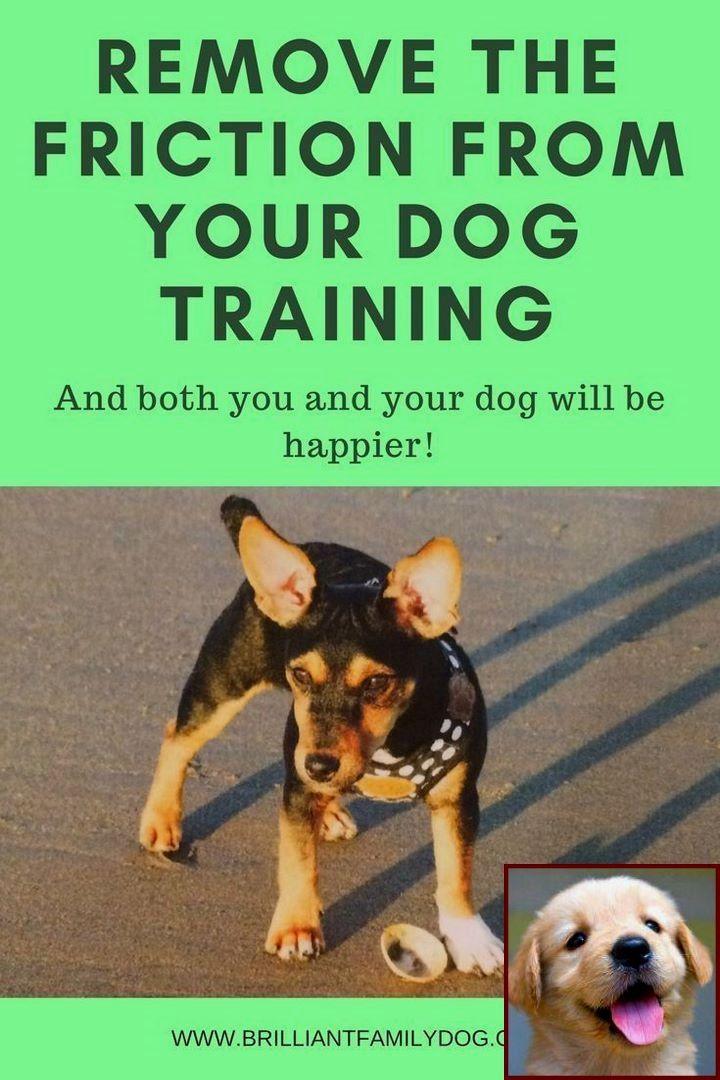 1 Have Dog Behavior Problems Learn About Dog Behavior Therapist