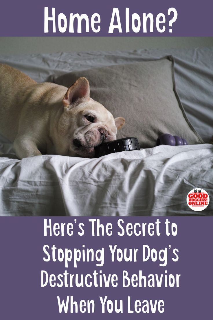 How to Stop Destructive Behavior in Dogs picture