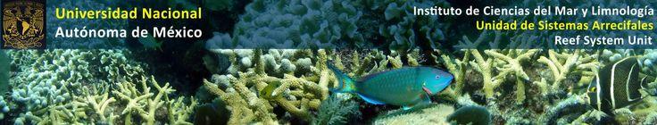 Puerto Morelos Reef Aquatic - Universidad Nacional Autónoma de México (UNAM).