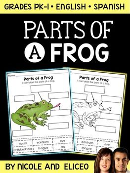 This downloads in English plus a FREE Spanish version. It includes an interactive cut and paste labeling activity for the parts of a frog in color and blackline. You can use them with your frog unit or lessons. These activities work well for a large group, small groups or for independent study. $2.00