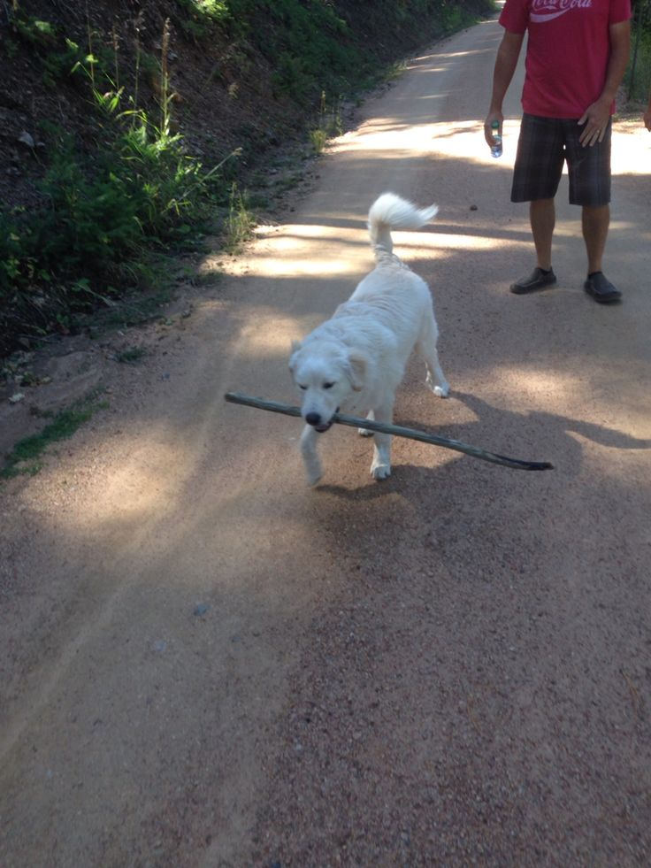 SVEN carries a big stick