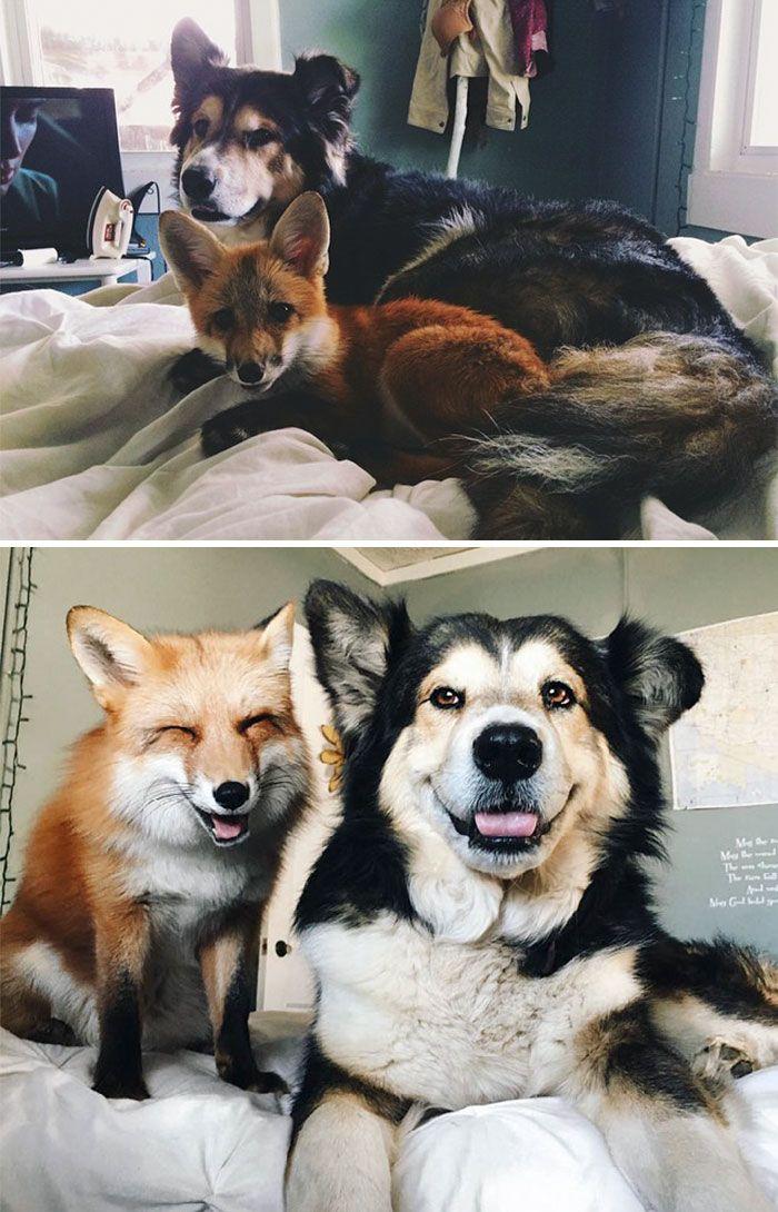 20 photos trop mignonnes d'animaux qui ont grandi ensemble, et qui ne se lâchent plus