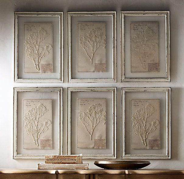 Dining Room Wall Restoration Hardware 19th C Framed Herbariums Ivory