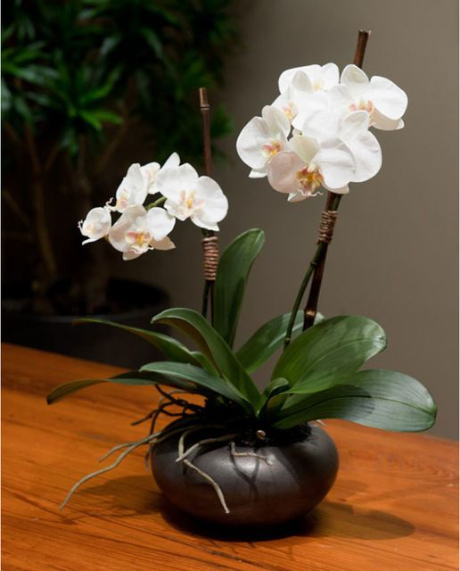 Double Phalaenopsis in Graphite Bowl transitional-artificial-flowers
