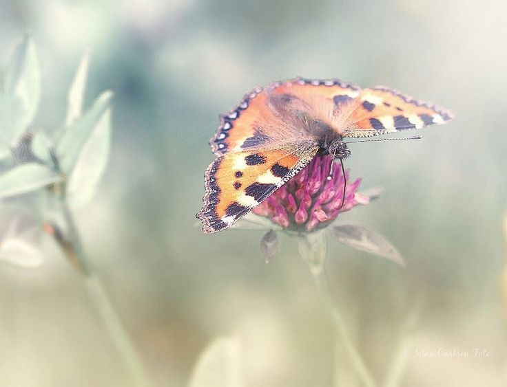 Butterfly  by Nina Carlsen on 500px