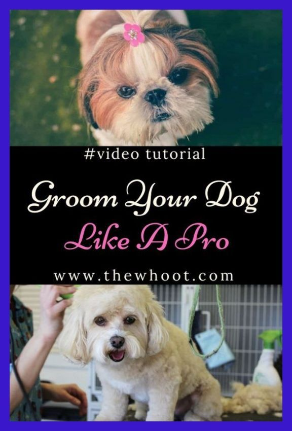 Practice At Home This Is One Of The Most Important Pet Grooming