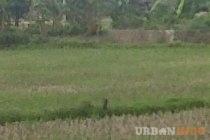 Tanah 2400 m2 di Jalan Hertasning Baru.