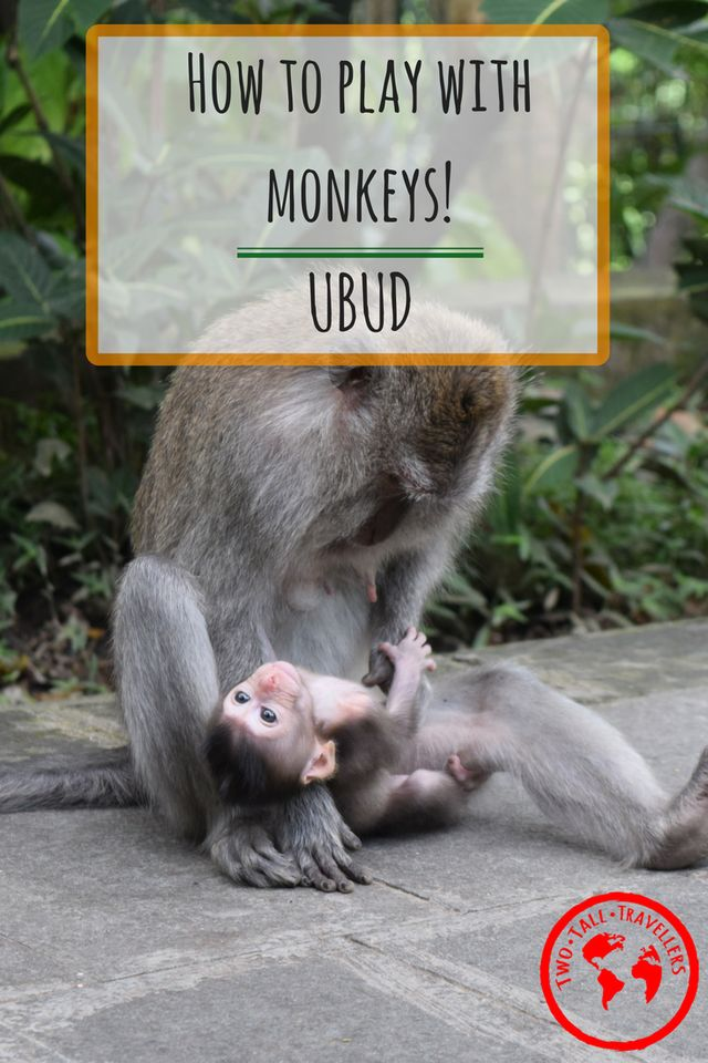 Have you ever wanted to get up and close to monkeys but you're worried about how the monkeys are treated? The answer is The Monkey Forest in Ubud, Bali!